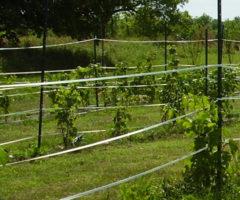 Legare in agricoltura
